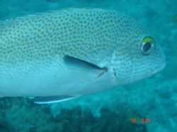 Up close fish - Sodwana Bay December 2006. 5 mile reef. S... by Loraine Smit