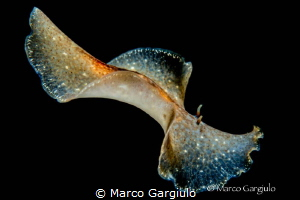 Flatworm by Marco Gargiulo