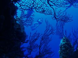 West side of Glovers Reef. by Martin Spragg
