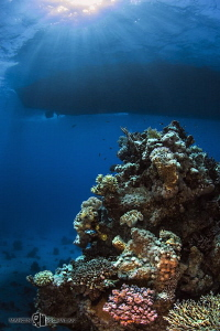 Red Sea View by Marcin Michalak