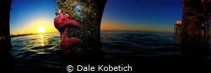 2 camera Panorama newport beach by Dale Kobetich