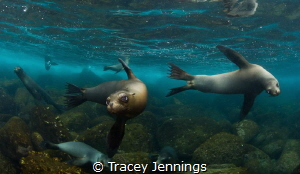 Whilst everyone else on the dive boat was having breakfas... by Tracey Jennings