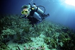 Canon Rebel T5i/700D, fisheye lens, Nauticam housing, dua... by Polly Alford