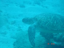 Turtle - Sodwana Bay 2 mile reef. This turtle had an inju... by Loraine Smit