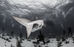 Divers at Tiger Beach with a little Shark Tail by Ken Kiefer