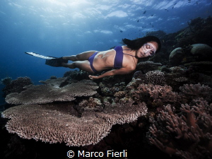 Ai Futaki and Table Coral