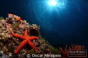 star by Oscar Miralpeix
