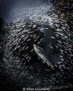 """Glory"" 