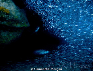 """""""Getting Lost with Silversides"""" - Finally got to get in t... by Samantha Morgan"""