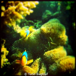 Captured by Gopro H2 by Turki Baghlaf