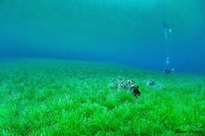Alone in the grass by Raoul Caprez