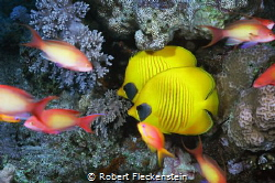 2 small Reef Fish. by Robert Fleckenstein