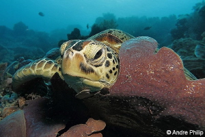 """""""Nice place to sleep"""" - Green turtle in her bed... ;-) N... by Andre Philip"""