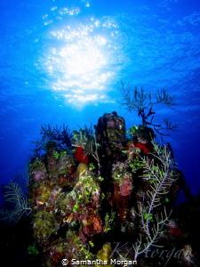 """Hello, Sunshine"" -I love underwater landscape. Especiall... by Samantha Morgan"