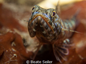 Lizardfish by Beate Seiler