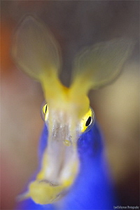 Blue Ribbon Eel by Iyad Suleyman