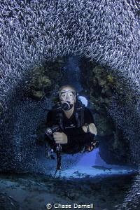"""""""Perfect Circle"""" Silversides parting in unison for a diver. by Chase Darnell"""