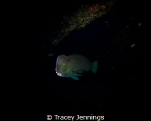 Early on the liberty wreck .. parrot fish are sleeping by Tracey Jennings