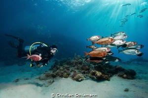 Just diving... Makadi Bay, Egypt. by Christian Schlamann