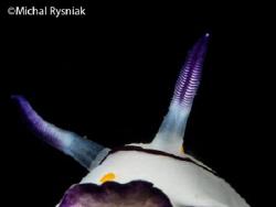 Horns by Michal Rysniak