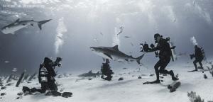 Tiger Sharks on Parade by Ken Kiefer