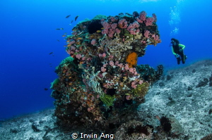 B L U E - W A T E R  Sumilon Island, Cebu. Philippines 2014 by Irwin Ang