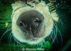 ..just for laughs, my aqua-phobic puppy. by Steven Miller