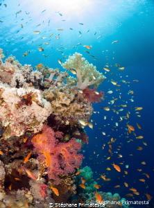 Red Sea reef by Stéphane Primatesta