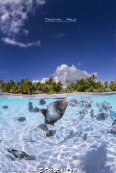 Over-under in Tikehau Lagoon by Cangemi Paul