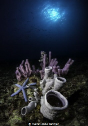 Colourful Tube sponges scenery in celebes sea and the blu... by Yusran Abdul Rahman