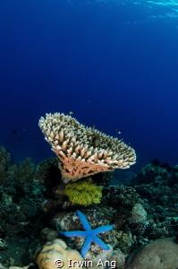 H E A R T - S T A R Apo Island, Cebu. Philippines 2014 by Irwin Ang