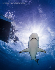 Reef Shark out of the sun by Ken Kiefer