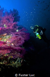 My body Sylvain at 55 meters depth, the famous Wreck of T... by Fuster Luc