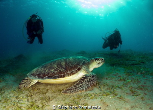 Green turtle and divers by Stéphane Primatesta