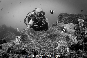 Face off .. by Tracey Jennings
