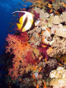 Red Sea reef. by Stéphane Primatesta