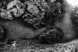 """""""Taking Over"""" Silversides might be one of the coolest th... by Chase Darnell"""