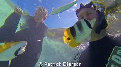 GoPro Still taken while feeding some fish in a Bora Bora ... by Patrick Dierson