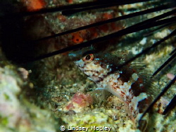 Protected by a sea urchin, but I got you anyway little one! by Lindsey Mobley
