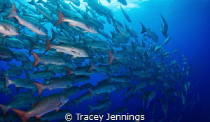 Follow my leader by Tracey Jennings