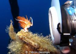 Posing Nudi. UW Studio sets and Godiva starts to dance an... by Yildirim Gencoglu