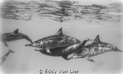 Dolphin Reef, Red Sea Egypt by Eddy Van Lier