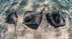 Three Friends by Nadya Kulagina