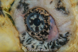 Guess the eye :-) by Steven Miller