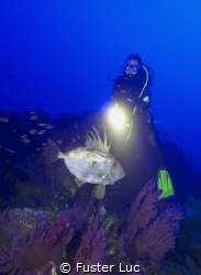 A big fella John Dory, this one around 2kg for 50cm lengt... by Fuster Luc