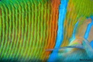 Rainbow by Raoul Caprez
