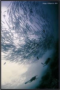 Barracuda Point. Sipadan island. by Sergey Lisitsyn