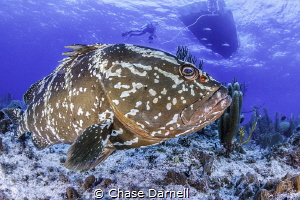 """""""Welcome to My Home"""" One of the friendly Grouper, of Lit... by Chase Darnell"""