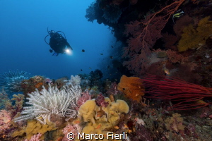Pretty Overhang in Wakatobi by Marco Fierli