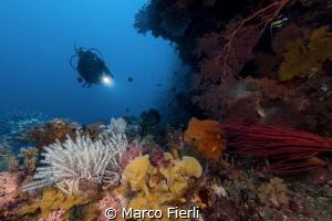 Pretty Overhang in Wakatobi by Marco Fierli